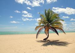 tropical tree - stock photo
