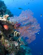 Colorful Coral Reef and fish Stock Photos