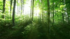 Morning in the forest Stock Footage