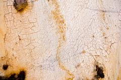 Stock Photo of gum tree bark