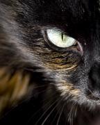 Cats eye Stock Photos