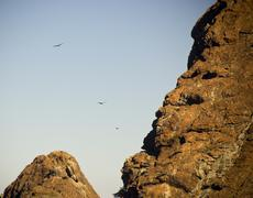 soaring eagles - stock photo