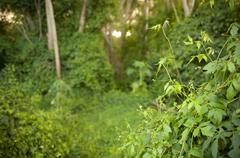 lush greenery - stock photo