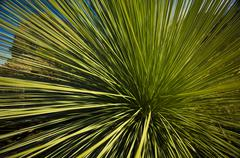 Grass tree Stock Photos