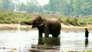 Stock Video Footage of Elephants bathing