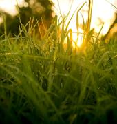 grass level sunrise - stock photo