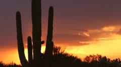 Arizona Saguaro Sunset Silhouettes Time Lapse Stock Footage