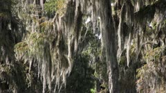 Swamp Scenic Moss - stock footage