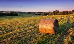 evening field - stock photo