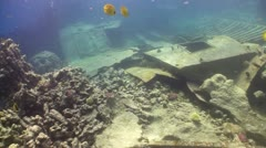 Shipwreck on the Seabed, Red Sea - stock footage