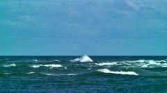Rough seas, waves and sea gulls Stock Footage