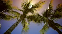 Sun Over Coconut Trees Stock Footage