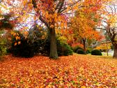 Stock Photo of Autumn in the park