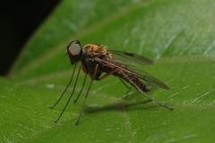Fly Insect Macro - Diptera - stock photo