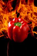 Pepper with fire background Stock Photos