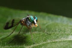 Fly Macro - Diptera - stock photo