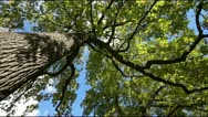 A tree in autumn Stock Footage