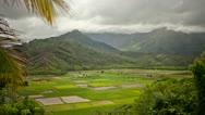 Kauai Agriculture Cultivation, Taro & Sugar Cane Time Lapse Stock Footage