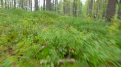 Green foliage in forest .taiga Stock Footage