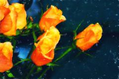 Orange roses fine art Stock Photos