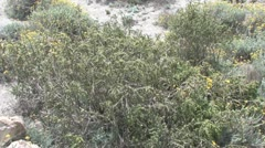 Stock Video Footage of Plants at Coast in Andalucia in Spain
