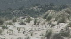 Sand dunes in Andalucia in Spain - stock footage