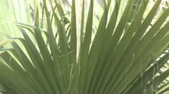 Palm in Andalucia in Spain Stock Footage
