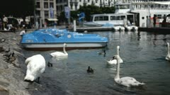 Swans and ducks swimming at boat dock Stock Footage