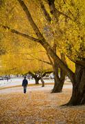 Autumn stroll Stock Photos