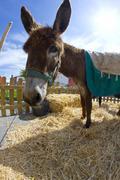 Farmland and  donkey head portrait Stock Photos