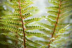 Stock Photo of fern details