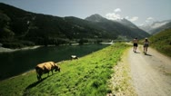 Couple trekking and cow in mountain Stock Footage