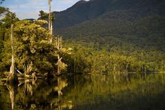 jungle lake - stock photo