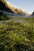 Stock Photo of milford track