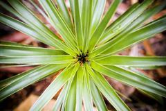 plant details - stock photo