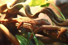 Lizards Stock Photos