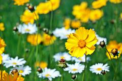 Beautiful yellow flower on a meadow in a sunny day Stock Photos