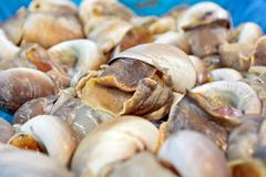 Fresh snails Stock Photos