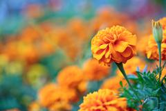Beautiful orange flower on blurred plants background Stock Photos