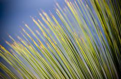 Grass tree details Stock Photos