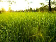 Lush grass Stock Photos