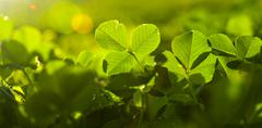 Greenery Stock Photos