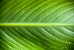 green leaf droplets - stock photo
