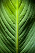 dramatic leaf detail - stock photo
