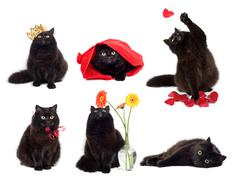 Black cats isolated collage of six photos Stock Photos