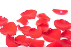 red rose petals isolated - stock photo