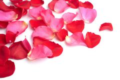 Red and pink rose petals isolated Stock Photos