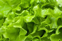 Stock Photo of fresh lettuce background