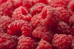 fresh raspberries background - stock photo