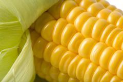 macro of fresh maize - stock photo